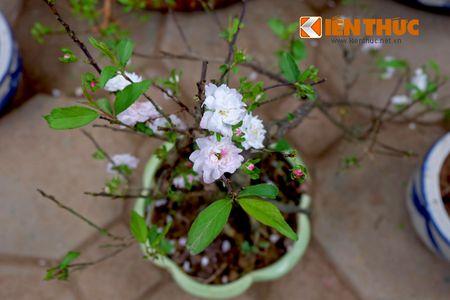 Sac hoa ruc ro tai pho hoa noi tieng nhat Ha Thanh - Anh 14