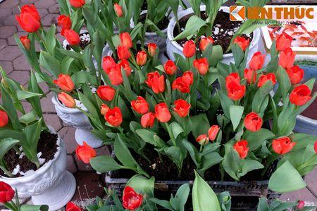 Sac hoa ruc ro tai pho hoa noi tieng nhat Ha Thanh - Anh 15