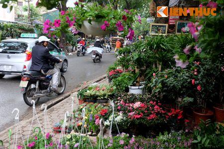 Sac hoa ruc ro tai pho hoa noi tieng nhat Ha Thanh - Anh 16