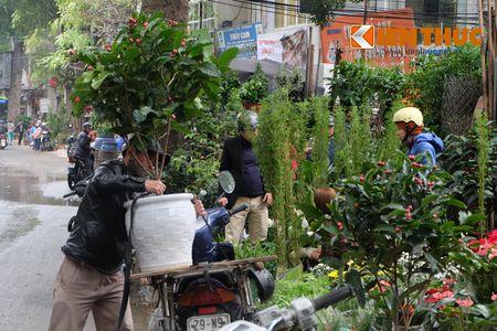 Sac hoa ruc ro tai pho hoa noi tieng nhat Ha Thanh - Anh 17