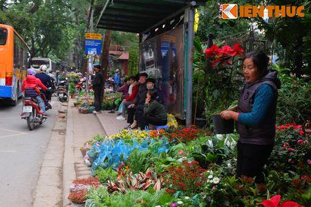Sac hoa ruc ro tai pho hoa noi tieng nhat Ha Thanh - Anh 18