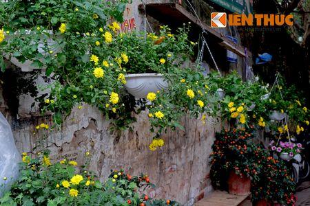 Sac hoa ruc ro tai pho hoa noi tieng nhat Ha Thanh - Anh 19