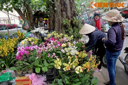 Sac hoa ruc ro tai pho hoa noi tieng nhat Ha Thanh - Anh 1