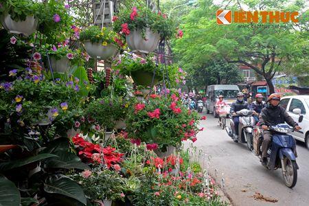 Sac hoa ruc ro tai pho hoa noi tieng nhat Ha Thanh - Anh 2