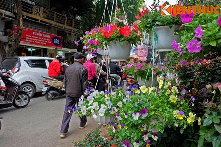Sac hoa ruc ro tai pho hoa noi tieng nhat Ha Thanh - Anh 3