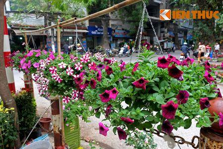 Sac hoa ruc ro tai pho hoa noi tieng nhat Ha Thanh - Anh 4