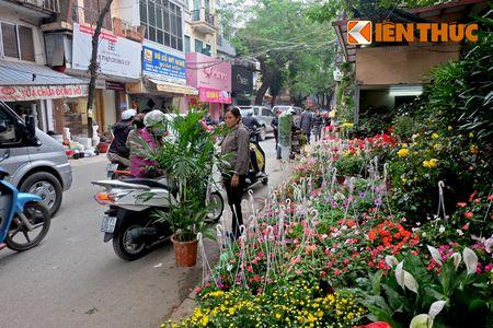 Sac hoa ruc ro tai pho hoa noi tieng nhat Ha Thanh - Anh 5