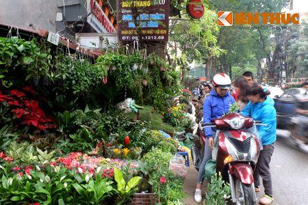 Sac hoa ruc ro tai pho hoa noi tieng nhat Ha Thanh - Anh 6