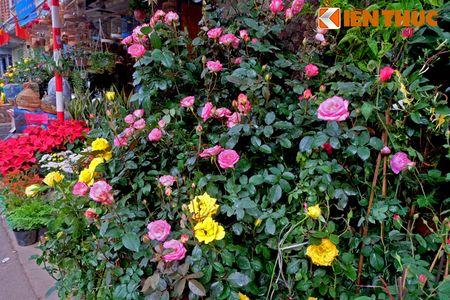 Sac hoa ruc ro tai pho hoa noi tieng nhat Ha Thanh - Anh 7