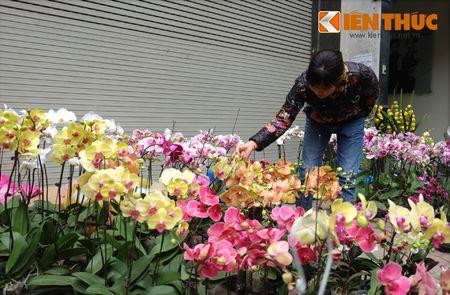 Sac hoa ruc ro tai pho hoa noi tieng nhat Ha Thanh - Anh 8