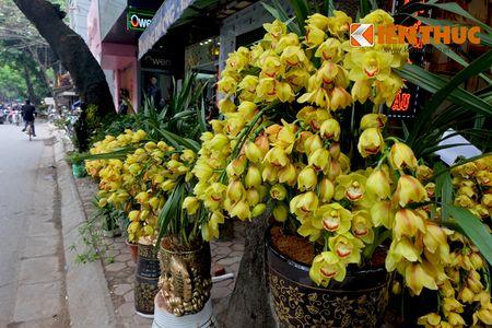Sac hoa ruc ro tai pho hoa noi tieng nhat Ha Thanh - Anh 9