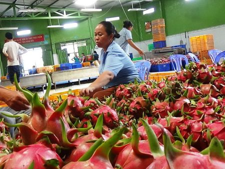 Thanh long Viet Nam chinh thuc vao thi truong Nhat - Anh 1