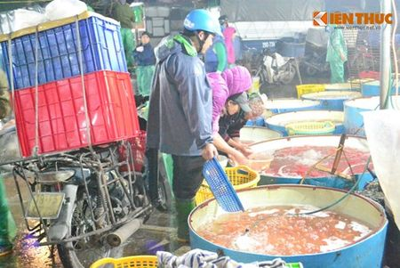 Cho ca Ha Noi tap nap truoc ngay cung ong Cong ong Tao - Anh 11