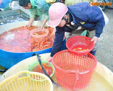 Cho ca Ha Noi tap nap truoc ngay cung ong Cong ong Tao - Anh 14