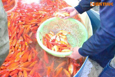 Cho ca Ha Noi tap nap truoc ngay cung ong Cong ong Tao - Anh 15