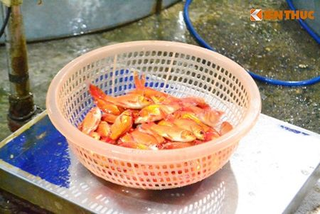 Cho ca Ha Noi tap nap truoc ngay cung ong Cong ong Tao - Anh 5