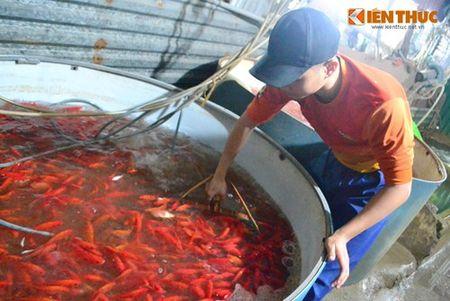 Cho ca Ha Noi tap nap truoc ngay cung ong Cong ong Tao - Anh 6
