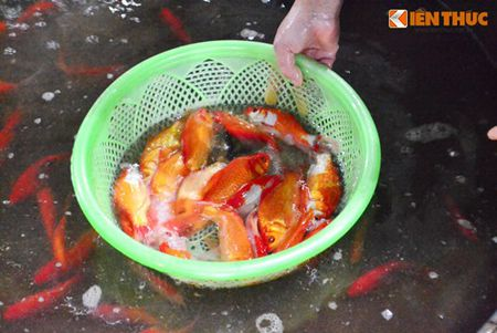 Cho ca Ha Noi tap nap truoc ngay cung ong Cong ong Tao - Anh 8