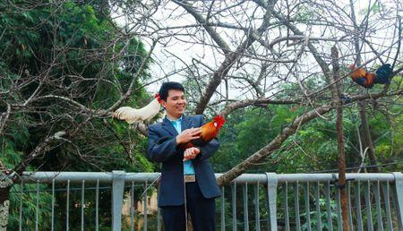 Dao da 'khung' duoc rao ban 40 trieu dong o mien Tay xu Nghe - Anh 4