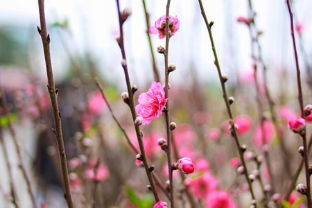 Nhung sac hoa Tet ngap tran pho phuong Ha Noi - Anh 2