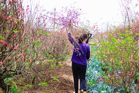 Nhung sac hoa Tet ngap tran pho phuong Ha Noi - Anh 3
