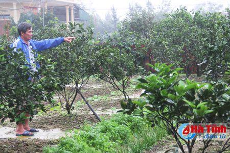 Cam mat mua, dan Cam Yen buon khong mang Tet - Anh 1