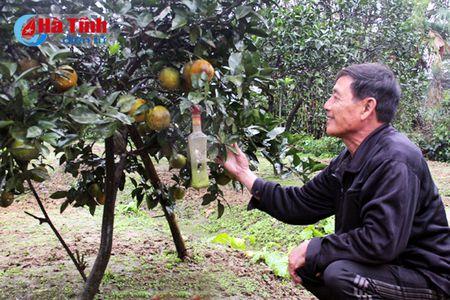 Cam mat mua, dan Cam Yen buon khong mang Tet - Anh 2