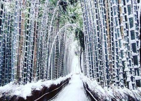 Ngam Kyoto dep nhu co tich mua tuyet roi - Anh 6