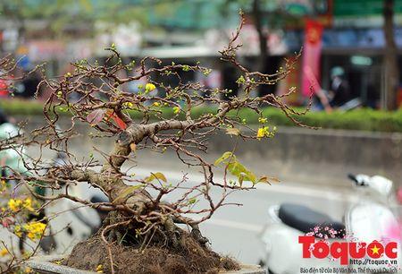 Mai Binh Dinh vuot ngan cay so don tet Thu do - Anh 5