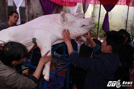 'Ong lon' mac 'ao choang' mo mang duoc ruoc khap lang La Phu - Anh 2