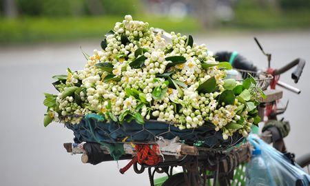 Duong pho Ha Noi ngat huong hoa buoi - Anh 1