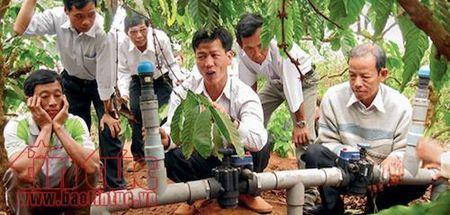 Tiet kiem mot nua luong nuoc tuoi cho cay ca phe Tay Nguyen - Anh 1