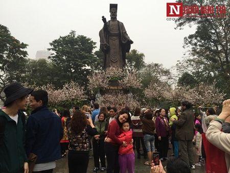 Le hoi Hoa anh dao 2017: Nong giua troi mua ret - Anh 1