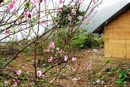 Dep ngo ngang hoa dao don Xuan muon tren cao nguyen da Dong Van - Anh 2