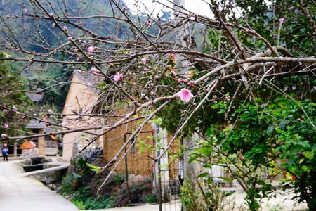 Dep ngo ngang hoa dao don Xuan muon tren cao nguyen da Dong Van - Anh 4