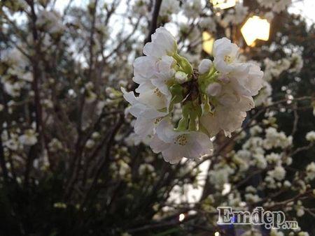 Nguoi dan Ha thanh hao huc thuong lam le hoi hoa anh dao - Anh 13