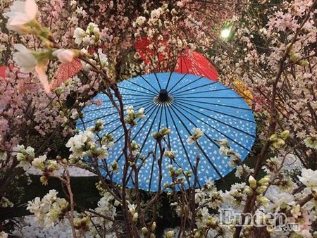 Nguoi dan Ha thanh hao huc thuong lam le hoi hoa anh dao - Anh 15