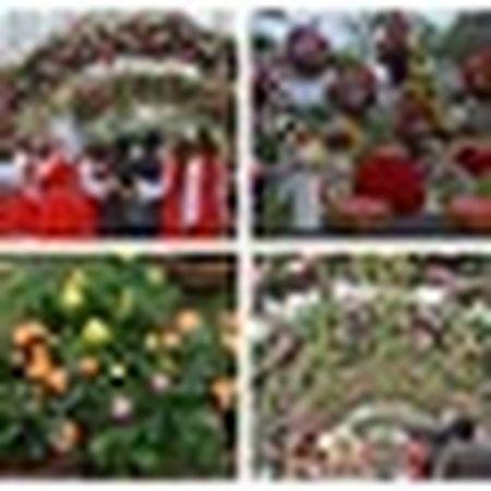 Nguoi dan Ha thanh hao huc thuong lam le hoi hoa anh dao - Anh 17