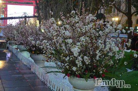 Nguoi dan Ha thanh hao huc thuong lam le hoi hoa anh dao - Anh 1