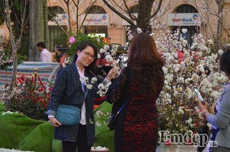 Nguoi dan Ha thanh hao huc thuong lam le hoi hoa anh dao - Anh 5