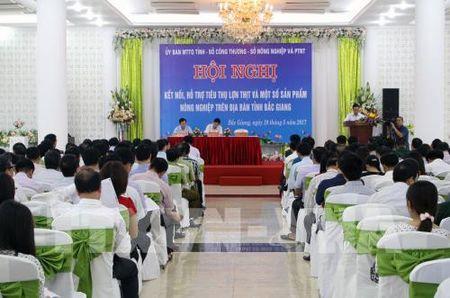 Tim giai phap ho tro tieu thu lon thit cho nguoi chan nuoi Bac Giang - Anh 1