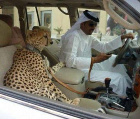 Dubai va nhung dieu khong tuong tu gioi sieu giau - Anh 7