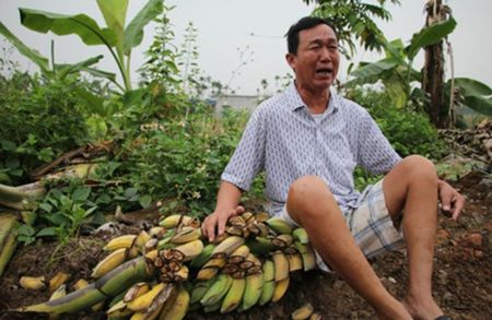 Huyen Thuy Nguyen: Nhom nguoi pha vuon chuoi tien ty khong quan he gi voi lanh dao dia phuong - Anh 1
