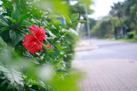 Sac hoa do ruc ro loi di ven duong khu Ho Ban Nguyet - Anh 1