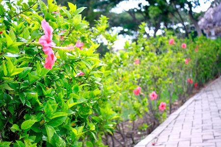 Sac hoa do ruc ro loi di ven duong khu Ho Ban Nguyet - Anh 2