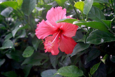Sac hoa do ruc ro loi di ven duong khu Ho Ban Nguyet - Anh 3