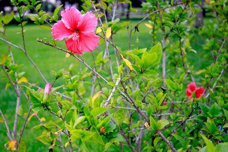 Sac hoa do ruc ro loi di ven duong khu Ho Ban Nguyet - Anh 4
