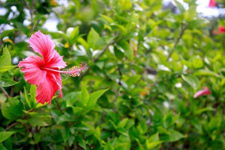 Sac hoa do ruc ro loi di ven duong khu Ho Ban Nguyet - Anh 5
