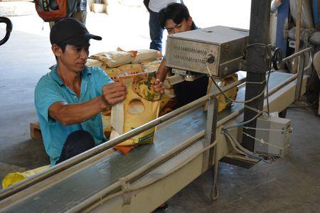 Co hoi trung thau ban 250.000 tan gao sang Philippines - Anh 1
