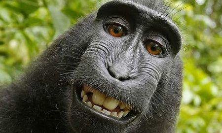 Nguoi dung sau buc anh 'con khi selfie' khanh kiet vi kien tung - Anh 1